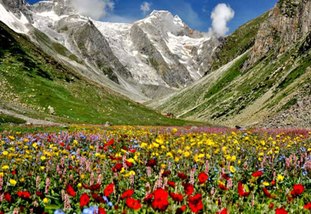 valleyofflowers4.jpg